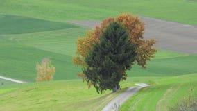 Ein Baum in der Landschaft Lizenzfreies Stockbild