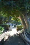 Ein Baum, der Schatten auf einem Weg bereitstellt lizenzfreies stockbild