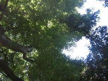 Ein Baum in der Sommerzeit Lizenzfreies Stockbild