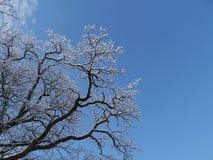 Ein Baum an einem sonnigen Tag im Winter Lizenzfreie Stockfotos