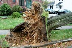 Ein Baum fällt vom sandigen Hurrikan stockbild