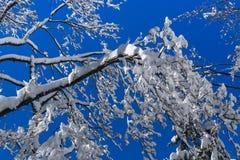 Ein Baum gefüllt mit Schnee Lizenzfreies Stockbild
