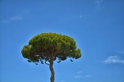 Ein Baum gegen den Himmel Stockbild