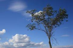 Ein Baum gegen den Himmel mit Wolken Lizenzfreie Stockfotografie