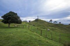 Ein Baum-Hügel, Auckland, Neuseeland Stockbilder