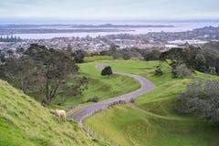Ein Baum-Hügelpark in Auckland Lizenzfreies Stockbild