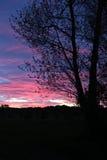 Ein Baum im bunten Sonnenuntergang Stockfotografie