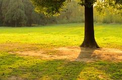 Ein Baum im Hintergrundbeleuchtung-Sonnenuntergang Stockfoto