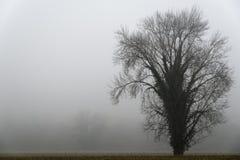 Ein Baum im Nebel Lizenzfreies Stockbild