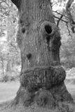 Ein Baum im neuen Wald Stockbilder