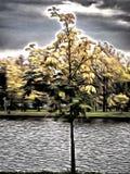 Ein Baum im Park - stilisiert zum Malen Stockbild