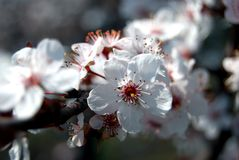 Ein Baum ist in der Blüte Stockfotografie