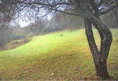 Ein Baum ist im Nebel Stockbilder