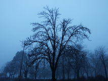 Ein Baum in Kelemegdan-Park lizenzfreie stockbilder