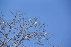 Ein Baum mit blauem Himmel Lizenzfreie Stockfotos