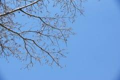 Ein Baum mit blauem Himmel Stockfoto