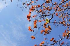 Ein Baum mit blauem Himmel Stockfotografie