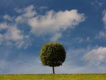 Ein Baum mit einer kugelförmigen alten Frau auf einer grünen Lichtung Lizenzfreie Stockfotos