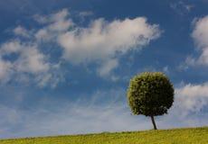 Ein Baum mit einer kugelförmigen alten Frau auf einer grünen Lichtung Stockbild