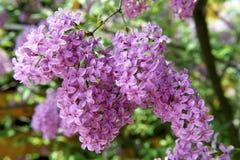 Ein Baum mit Frühlings-Farbe Lizenzfreie Stockfotos