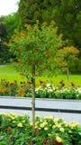 Ein Baum mit kleinen orange Blumen Lizenzfreie Stockfotos
