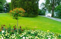 Ein Baum mit kleinen orange Blumen Stockbild