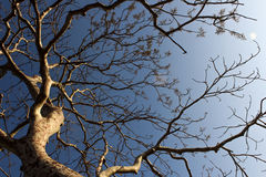 Ein Baum mit Masche von Niederlassungen und kleiner von Blättern lizenzfreie stockbilder