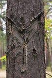 ein Baum mit Narben Stockfotos