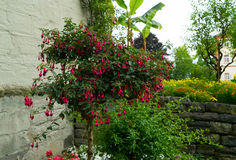 Ein Baum mit roten Blumen im Garten Stockbilder