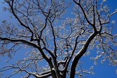 Schnee und Baum Lizenzfreie Stockbilder