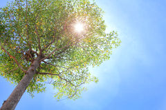 Ein Baum mit Sonneleuchte Lizenzfreies Stockfoto