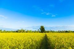 Ein Baum mitten in dem Getreidefeld Stockbild