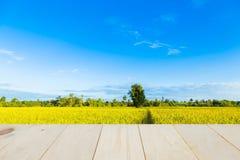 Ein Baum mitten in dem Getreidefeld Lizenzfreies Stockfoto