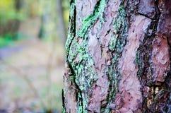 Ein Baum mitten in dem Wald Stockfotos