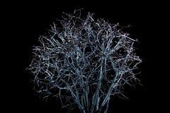 Ein Baum nachts Lizenzfreies Stockbild