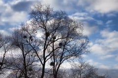 Ein Baum ohne Blätter im Winter Stockfotografie