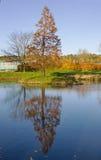Ein Baum reflektiert in einem See Stockfotos