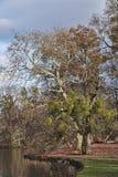 Ein Baum am See, Nymphenburg-Schlosspark, München, Deutschland lizenzfreies stockfoto