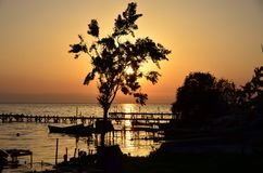 Ein Baum am Sonnenunterganghimmel stockbilder