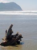 Ein Baum-Stumpf auf einem Strand Stockbilder