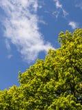 Ein Baum und der Himmel Stockfoto