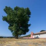 Ein Baum und ein Auftrag Stockfoto
