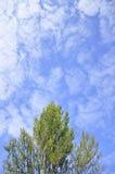 Ein Baum und ein blauer Himmel in Frankreich stockbilder