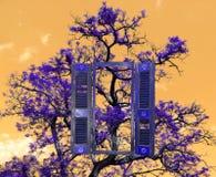 Ein Baum und ein Fenster, Stockfotografie