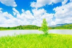 Ein Baum und ein Fluss Lizenzfreie Stockfotografie