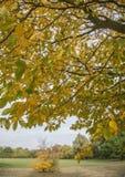 Ein Baum und ein Teppich von gelben Blättern Lizenzfreie Stockbilder