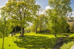 Ein Baum und sein Schatten, Stirling Castle, Schottland lizenzfreie stockfotografie