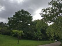Ein Baum und Wolken Stockbilder