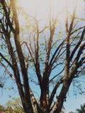 Ein Baum unter der Sonne stockbild