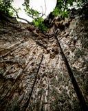 Ein Baum vom Innere Lizenzfreies Stockfoto